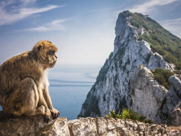 monkey-in-gibraltar-2