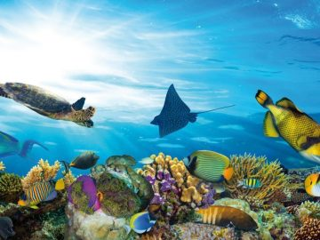 underwater-sea-life-coral-reef-panorama-with-many-fishes-and-mar